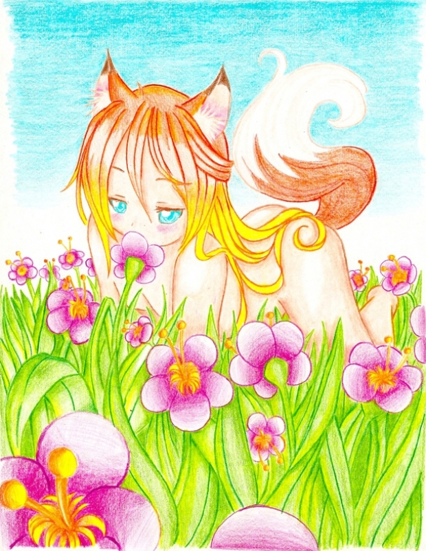 fox in a flower field