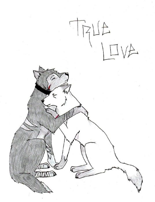 Anime Wolf Love http://www.theotaku.com/fanart/view/223543/true_love