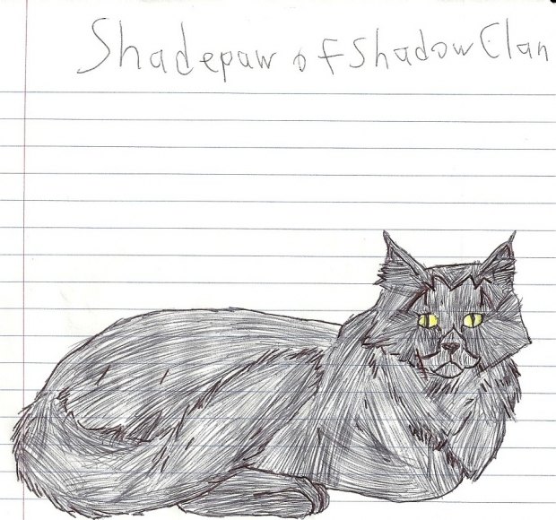 Shadepaw of Shadowclan
