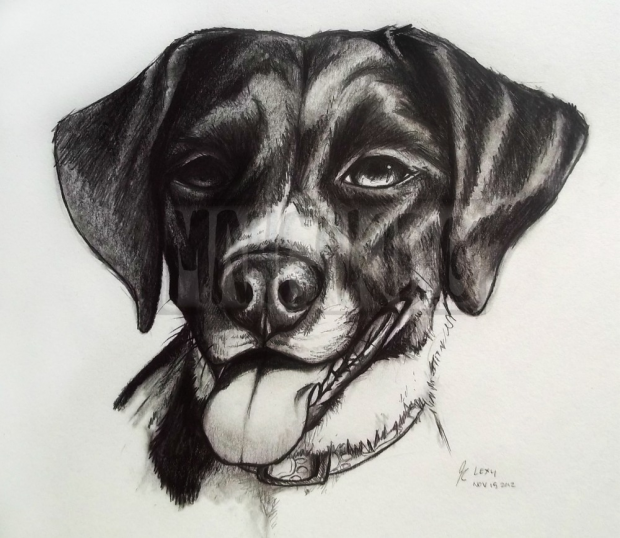 Dog Portrait-Lexy