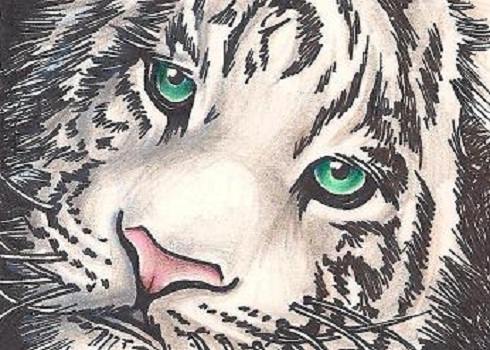 White Tiger Aceo